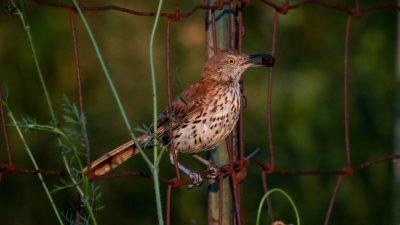 Devotional on birds